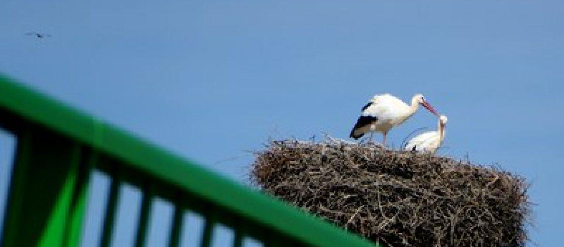 stork and rail